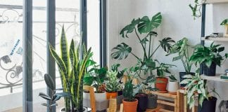 Exceptional Indoor Garden Ideas That Would Show Your Creativity