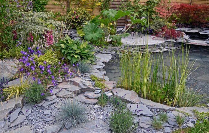 best plant ideas for water garden