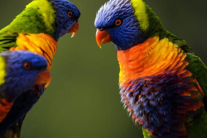 best proven ideas on making your backyard bird friendly