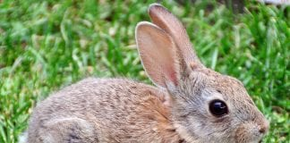 how to protect your garden and fight off plant eating rabbits