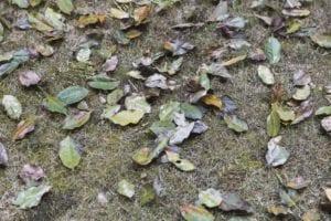 plant defoliation