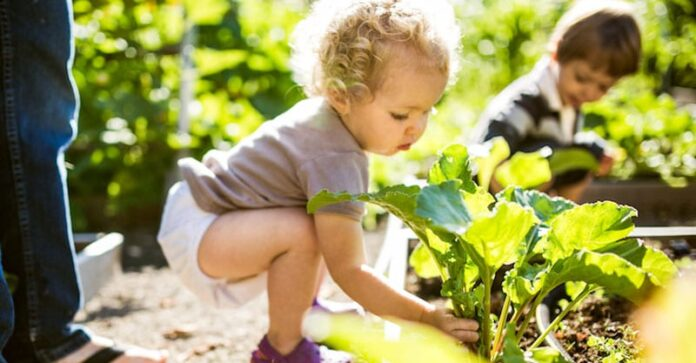 growing a garden with your toddler