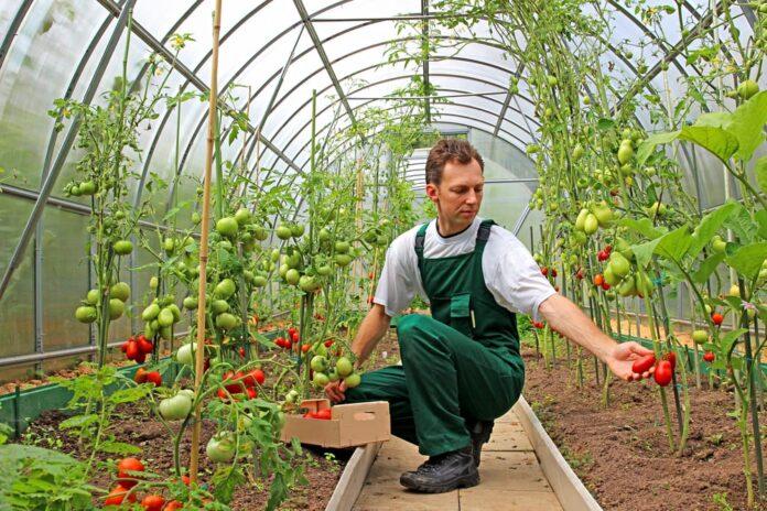 how to make gardening profitable