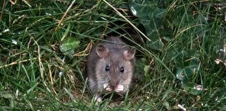how to protect your trees from rodents