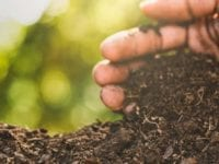 how to use compost as soil amendment