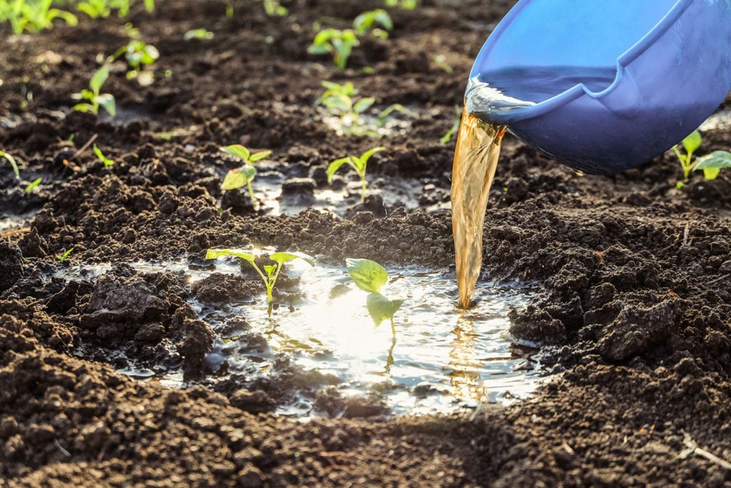 how to use soil drenches in gardens