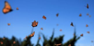 The Importance Of Attracting Butterflies Into Your Garden