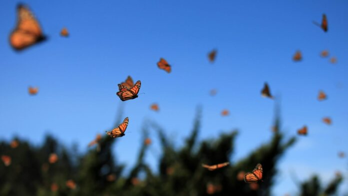 learn how to attract butterflies into your garden and its ...