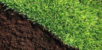 making a lawn more acidic