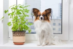 safe houseplants for dogs