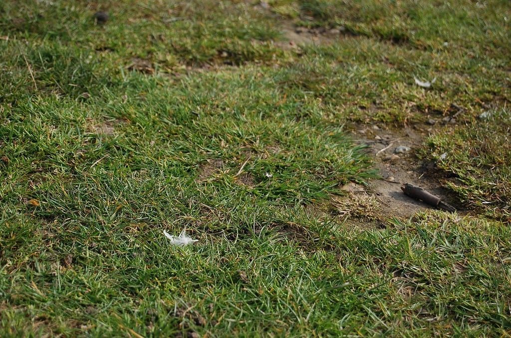 dealing with a receding lawn
