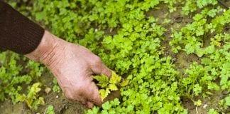 dealing with weeds in your garden