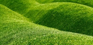 growing grass on slopes