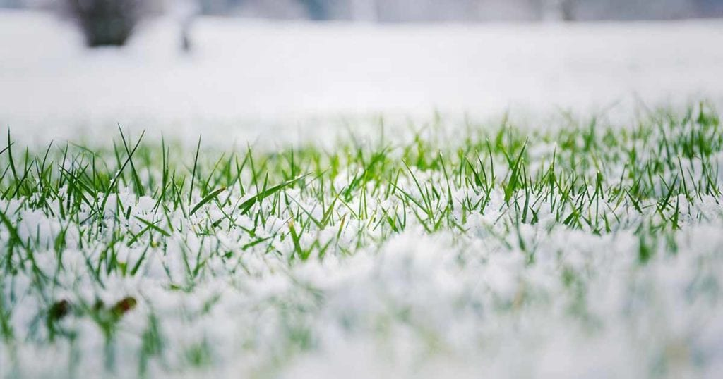 how to care for lawns in winter