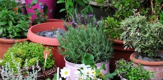 protecting container plants from animals
