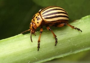 using plants as bug deterrent