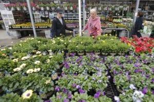why you should shop at a local garden center