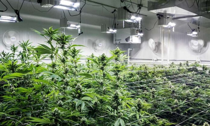 where to place dehumidifier in grow room
