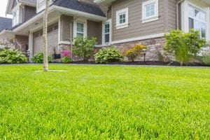 how to grow grass in sandy soil and shades